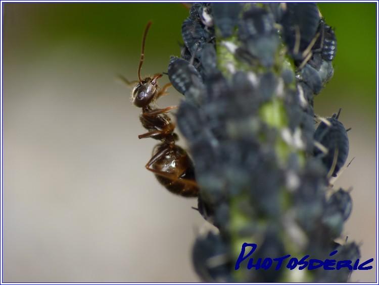 p1010217 dans Macro insectes