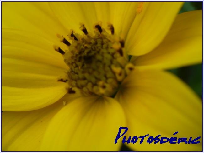 p1010285 dans Macro plantes