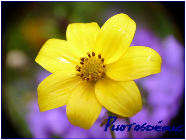 dans Macro plantes p1010721